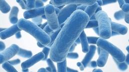 bacterias-probióticos