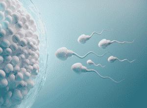 flora-vaginal-y-problemas-de-fertilidad